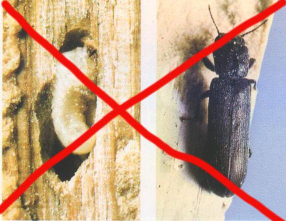 Megszüntető favédelemre